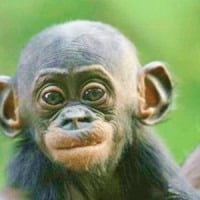 Funny-pictures-of-baby-monkeys-5-300x300