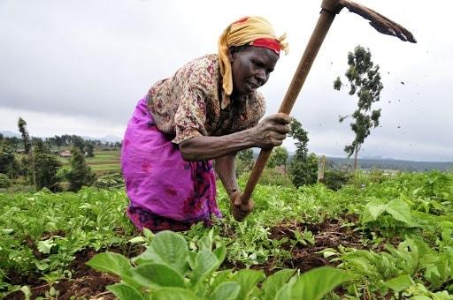 A farmer at work in Kenya's Mount Kenya region (2010) | Neil Palmer (CIAT) | Wikimedia Commons